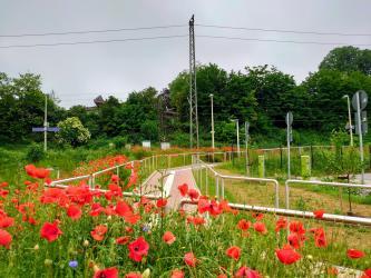 Blumenmeer vor barrierefreier Haltestelle