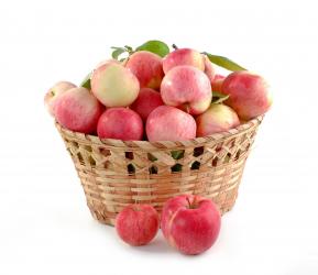 Auf dem Bild ist ein Korb voll Äpfel zu erkennen.