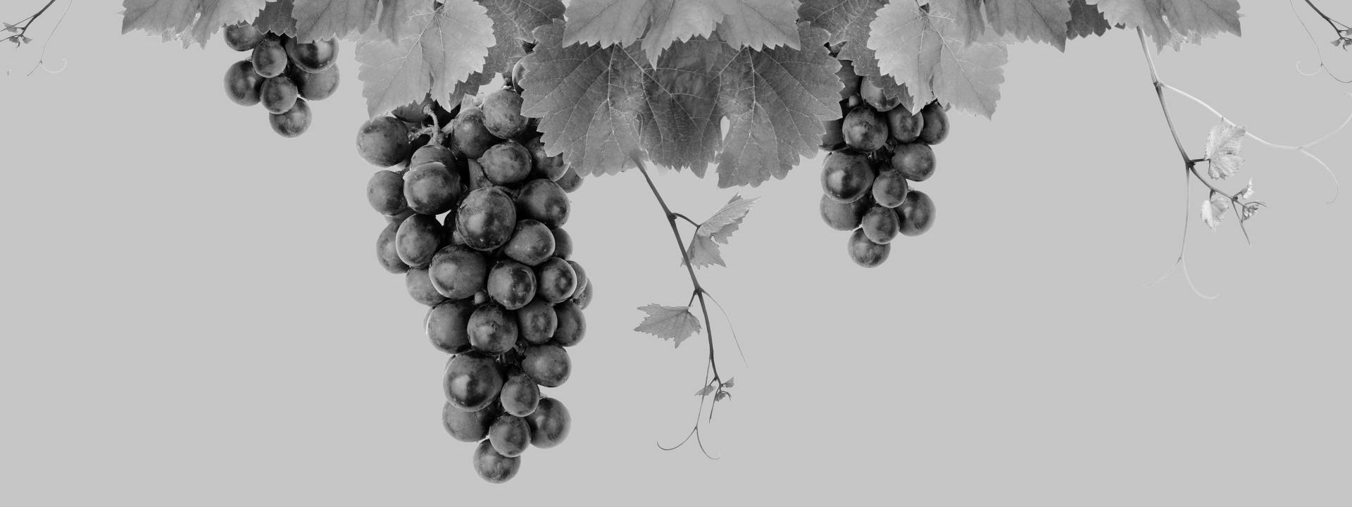 33. Brettener Weinmarkt