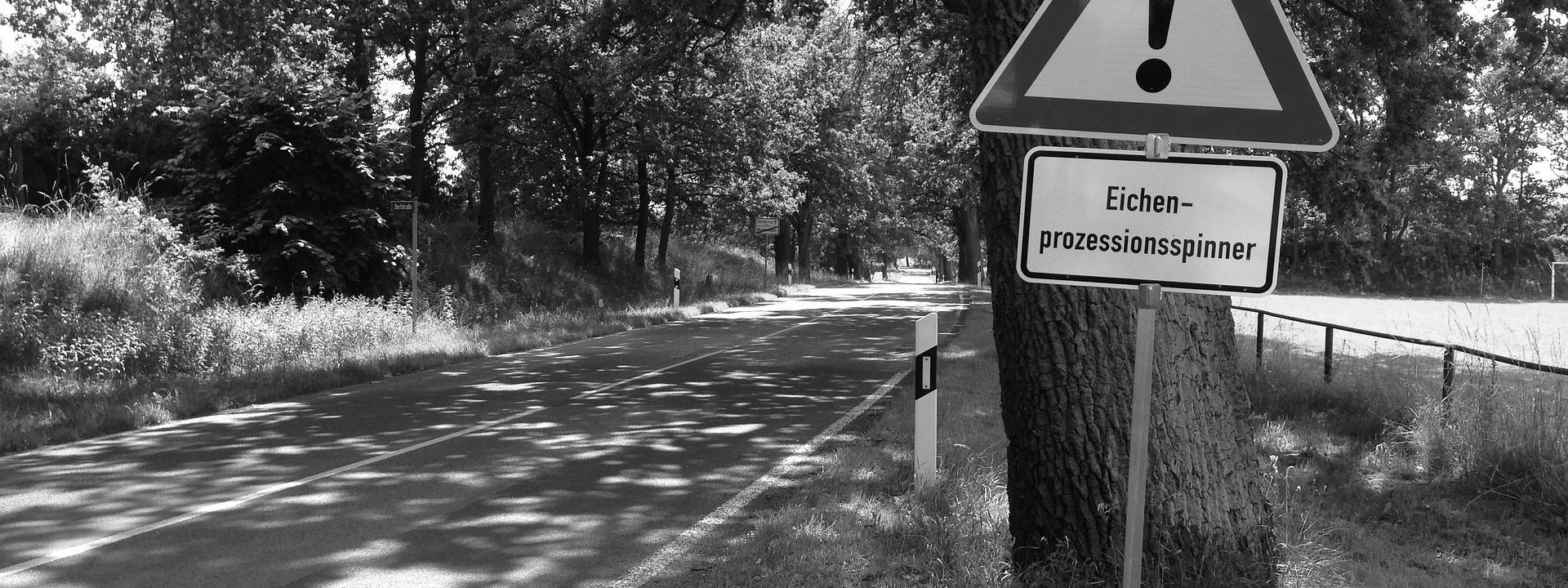Eilmeldung! Erneuter Vorfall durch Eichen-Prozessionsspinner an der Schillerschule und Max-Planck-Realschule in Bretten